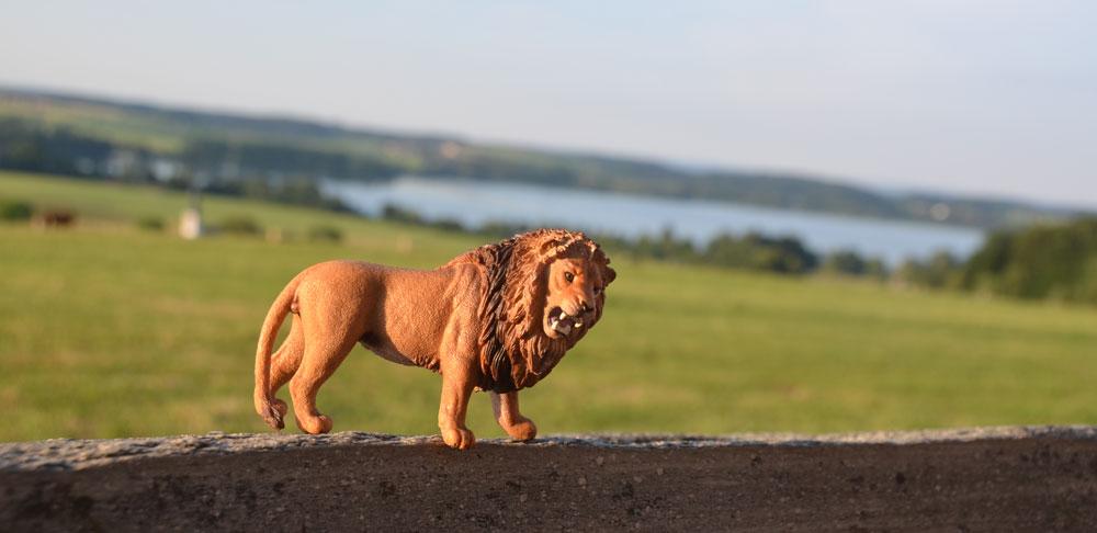 Lions-am-Muehlberg.jpg